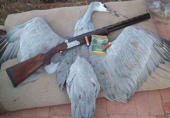 Mary's Remington Premier O/U and greater sandhill crane.