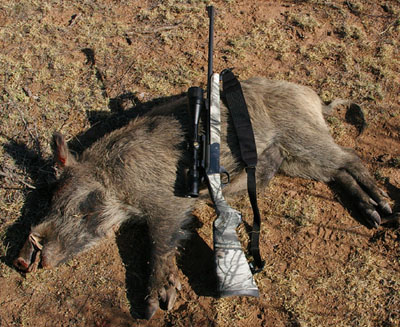 Traditions Outfitter and feral hog